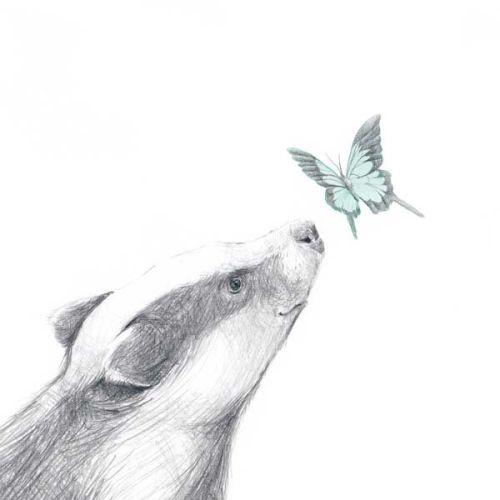 Kort, Grevlingen og sommerfuglen, Tails, Store