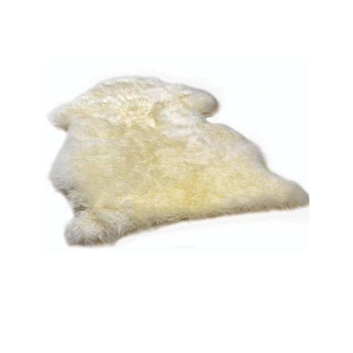 Lammeskinn, korthåret, Segr, Hvit