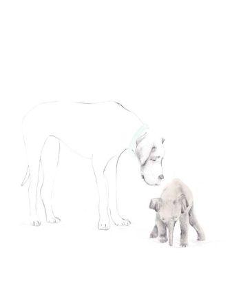 Kort, Elefanten og hunden, Tails, Store